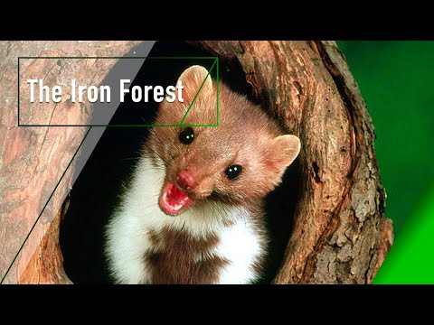 The Iron Forest - The Secrets of Nature
