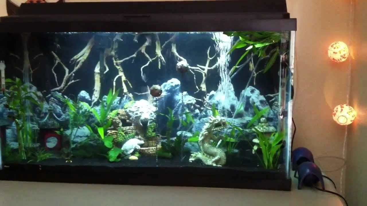 38 gallon aquarium d youtube for 38 gallon fish tank