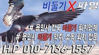 용인시) 【비둘기 X파일】비둘기퇴치 전문 업체 소독,진…