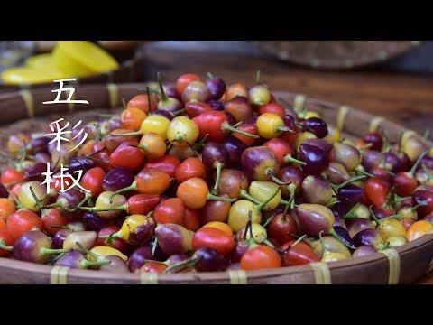 五彩椒這樣泡香辣又爽脆,開胃下飯,泡制方法還這麽簡單