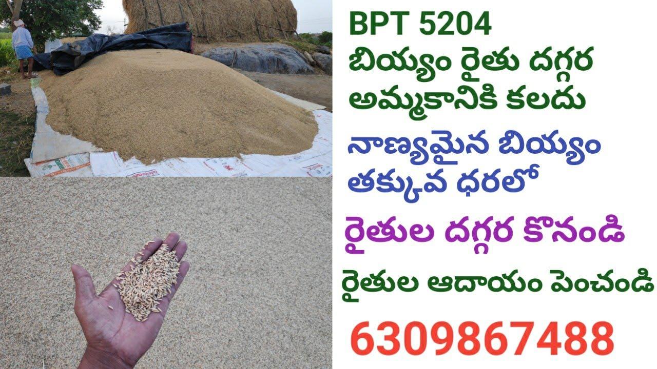 BPT 5204 బియ్యం రైతు దగ్గర అమ్మకానికి కలదు || నాణ్యమైన బియ్యం తక్కువ ధరలో || రైతుల దగ్గర కొనండి