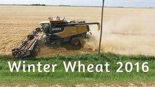 Winter Wheat 2016 canada