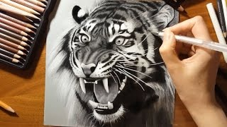 Speed Drawing: a Roaring Tiger | Jasmina Susak