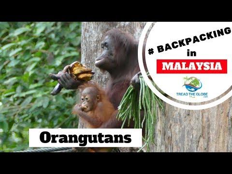 Day 11: Part 1 - Visiting Sepilok Orangutan Sanctuary Sabah Borneo
