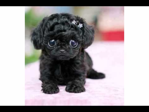 Happy Birthday From This Cute Little Black Puppy Youtube