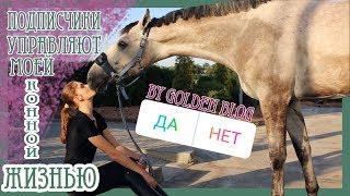 Подписчики управляют моей конной жизнью ✨