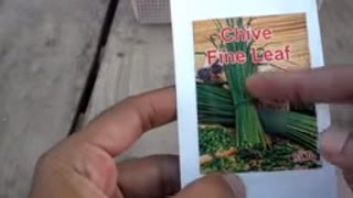 How to Grow Chives Leaves From Seeds | How to Grow Herbal Plant at Home | September-2016(Urdu/hindi)