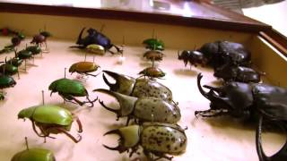 10   Insect Diversity in the Amazon Rainforest with Terry Erwin