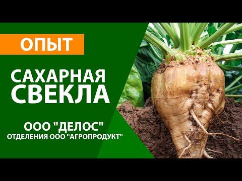 """Опыт на сахарной свекле в ООО """"Делос"""" , отделения ООО """"Агропродукт"""""""