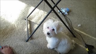 Vlog #392 Upset Puppy Tummy!  -may 19,2014