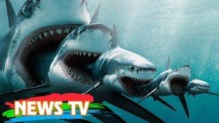"""Xơi tái cả cá mập trắng, đây mới là """"quái vật"""" đáng sợ nhất đại dương"""