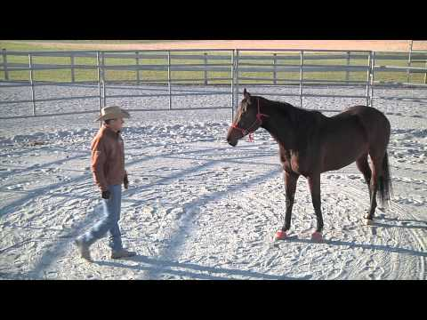 Training and Off the Track Thoroughbred Part 2 - Advantage Horsemanship TV