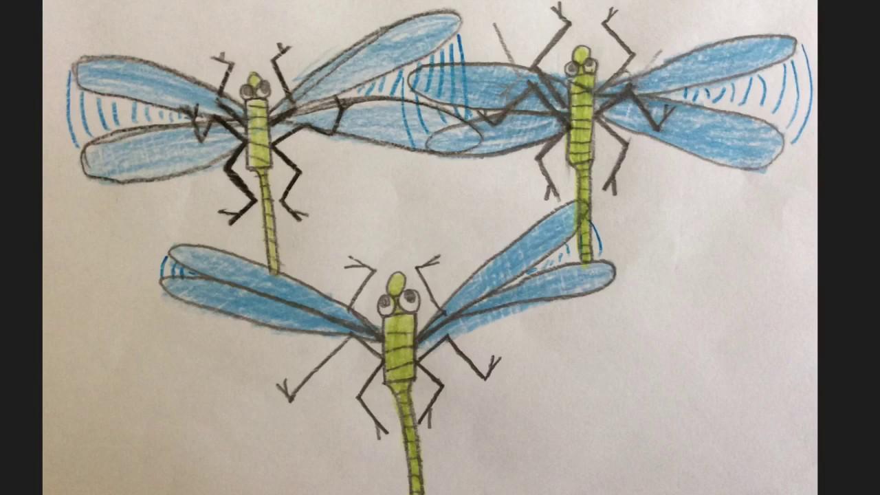 Wie man eine Libelle zeichnet - YouTube