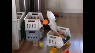 Попугаи нарезка приколов