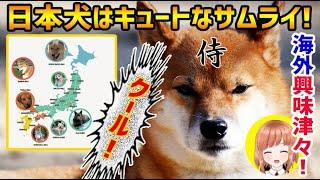 【海外の反応】日本犬はキュートなサムライ!日本犬の日本地図に海外が興味津々!【日本人も知らない真のニッポン】