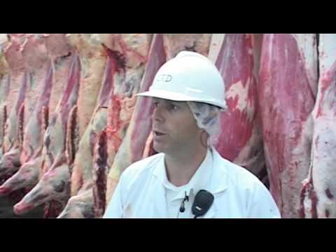 Cattle Abattoir  Entire Process (http://jas.b1u.org/category/tieng-viet/)