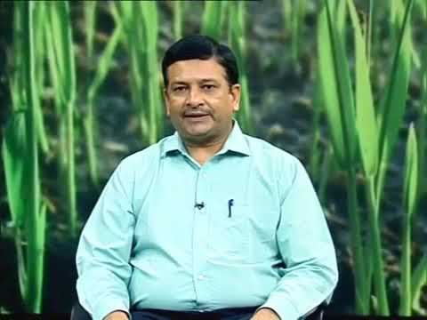 Check Out Shivendra Singh, CEO Barton Breeze On Doordarshan Talking About Hydroponic