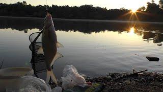 Подлещик, плотва, густера на рассвете, рыбалка в приятной компании