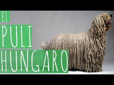 El Puli Hungaro - MuKi&Mu