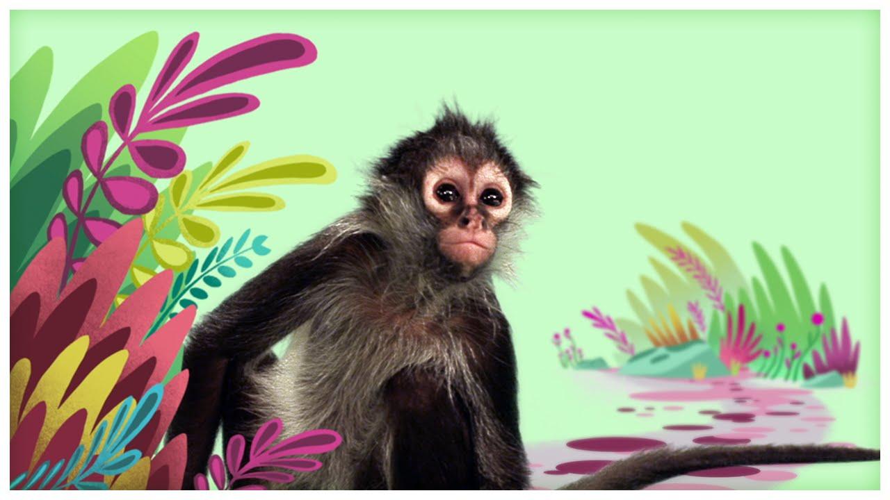 Animal Songs Spider Monkey By Storybots Netflix Jr Youtube