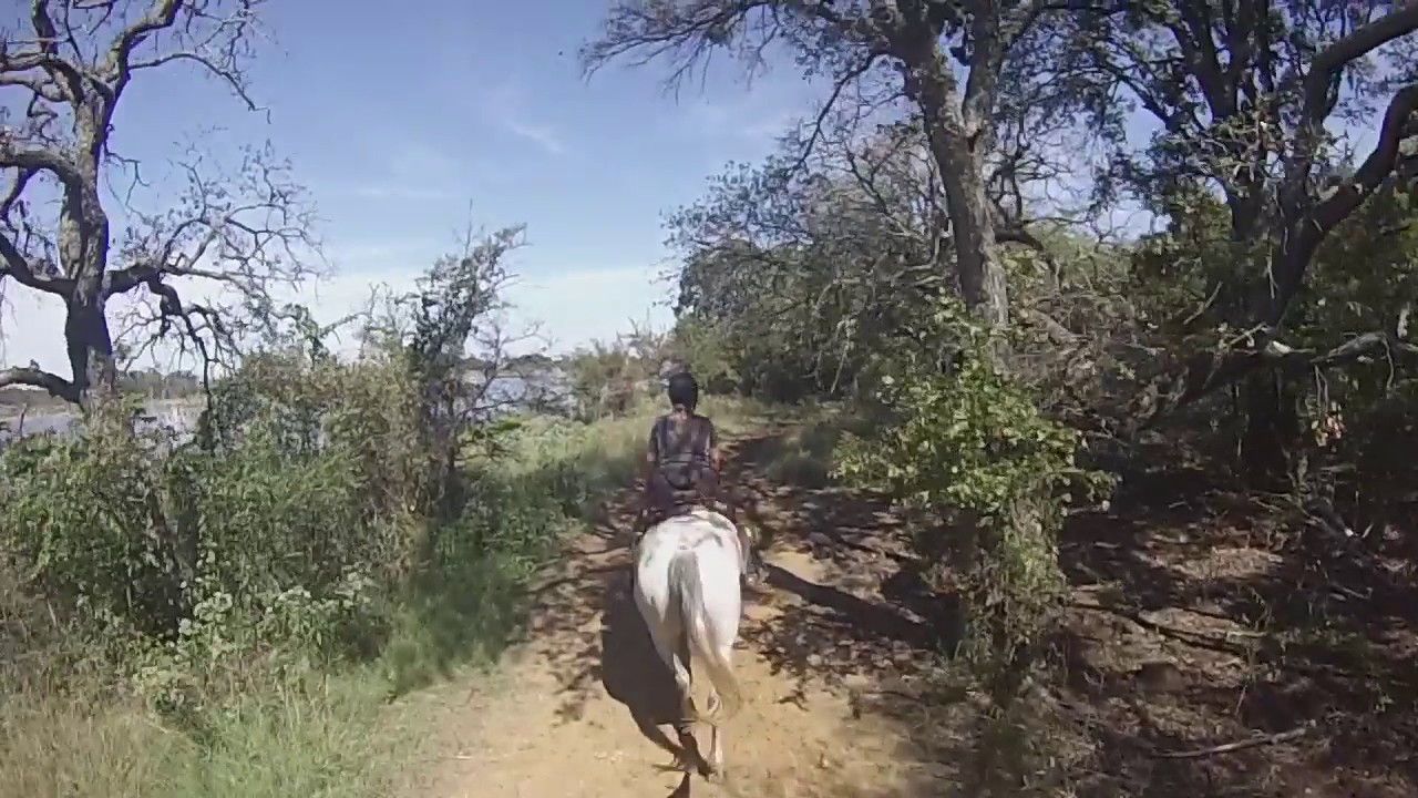 Trail Riding In Dallas Tx Black Mustang Ranch Youtube