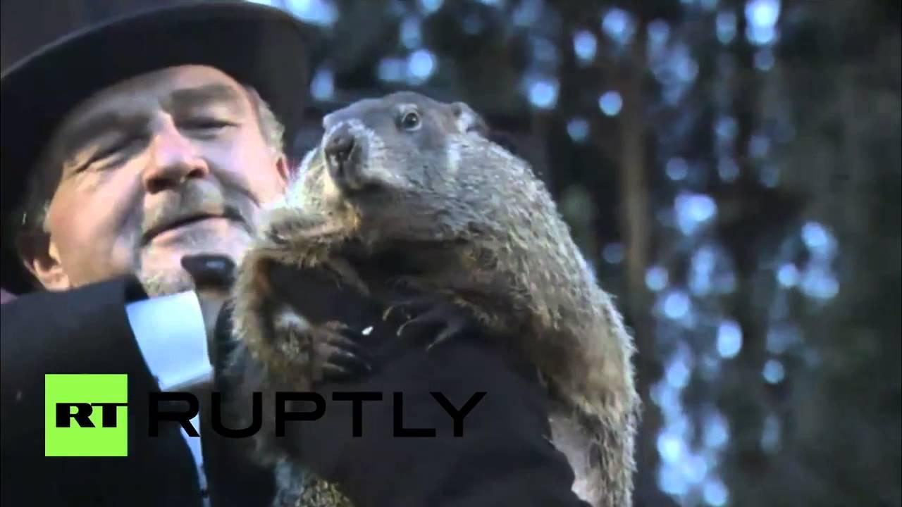 Uncategorized Groundhog Day Videos groundhog day 2016 punxsutawney phils prediction youtube