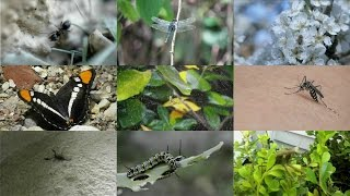 the insects for kids pronunciation in english with videos