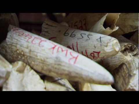 Caught in the Crosshairs: Combating the Illegal Wildlife Trade in Iraq & Afghanistan TRAILER