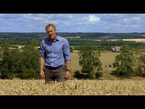 Extreme weather 2018 - Farmers yields this year (UK) - BBC - 12th August 2018