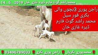 Rajanpuri Goat Farm - Cerrocosocommunitycollege