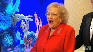 Betty White's Morris Animal Foundation Tank | Tanked