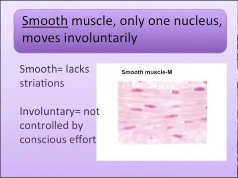 Muscle Types Song