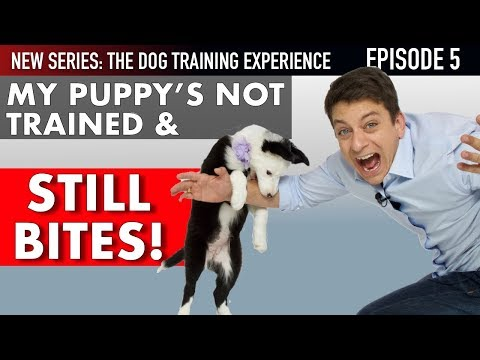 Ive Had My Puppy 6 Days and Shes NOT TRAINED! (NEW SERIES: The Dog Training Experience Episode 5)