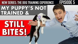 i-ve-had-my-puppy-6-days-and-she-s-not-trained-new-series-the-dog-training-experience-episode-5