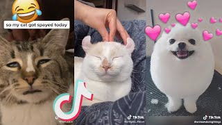 2020 may funny cute tiktok animals compilation