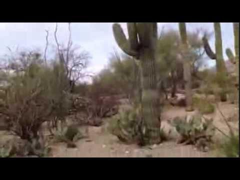 Things To Do in Tucson: Sabino Canyon Shuttle Tour
