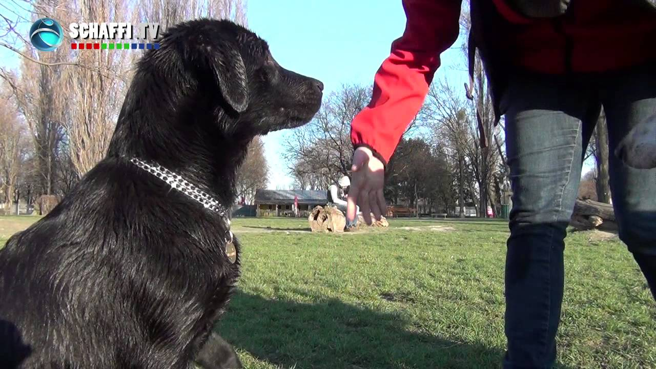 Hundezone 1210 Wien Angelibad Youtube