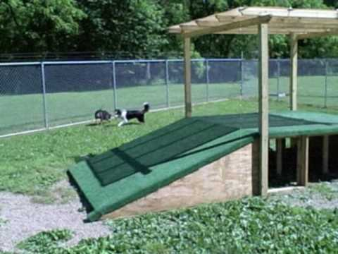 Play all day - at Little River Pet Resort! Cleveland, OH