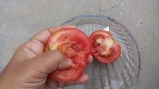 113-How to grow TOMATOES /Tamatar from seed (Hindi /Urdu) 13/8/16