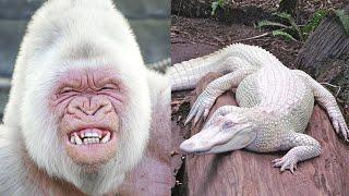 दुनिया के ऐसे जानवर जिन्हें देखने के लिए नसीब लगता है, जल्दी से देखलो - Most Amazing Albino animals