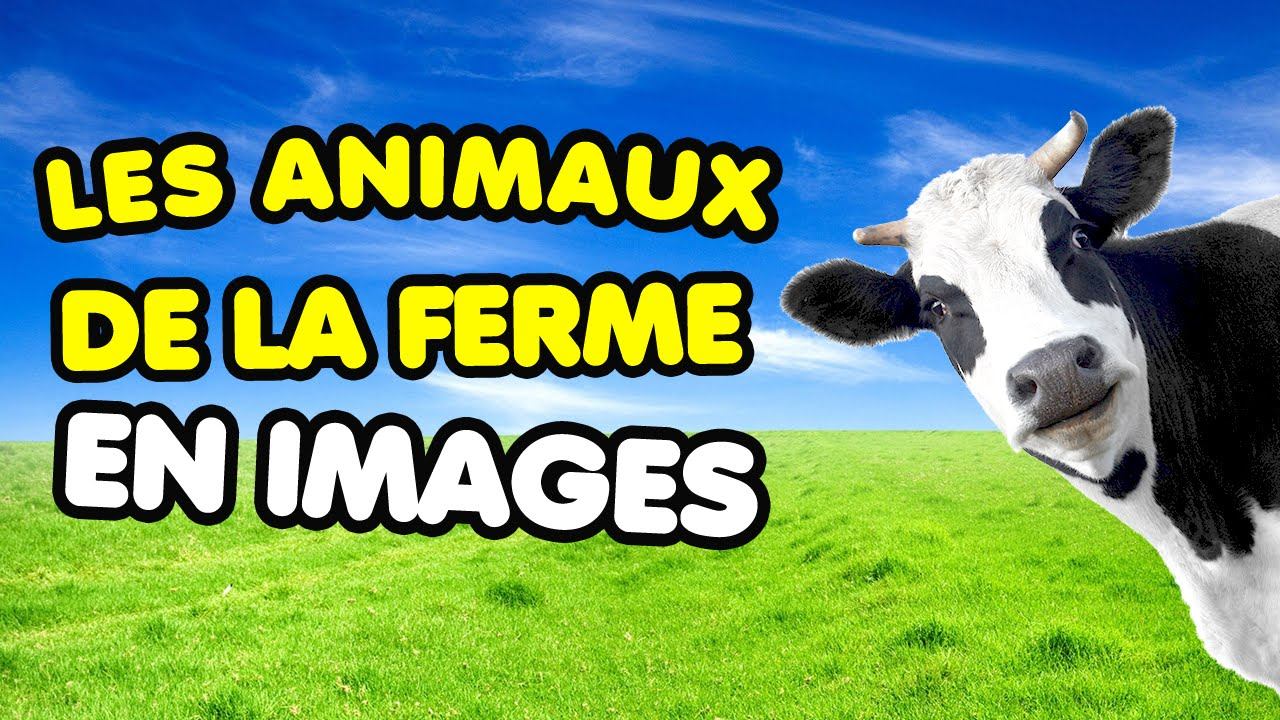 apprendre les animaux de la ferme avec les images imagier vid o pour enfants youtube. Black Bedroom Furniture Sets. Home Design Ideas