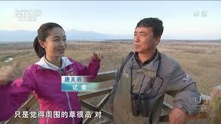 [远方的家]行走青山绿水间 尕海湿地观候鸟| CCTV中文国际