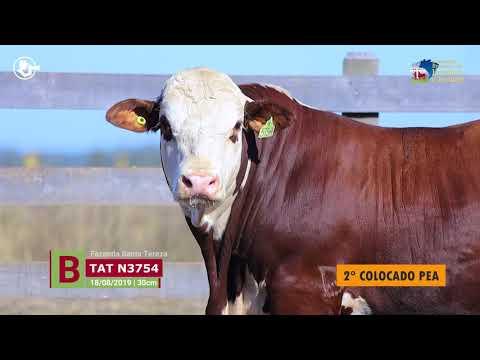 Touro N3754 - Fazenda Santa Tereza