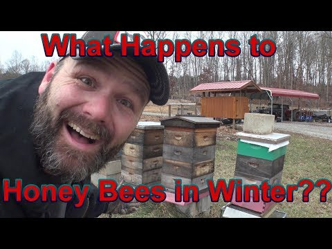 What happens to honey bees in the winter?? Walk with me and learn something today!
