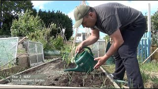 Runner Beans And Onions | May (ep14/y2) | Sean's Allotment Garden