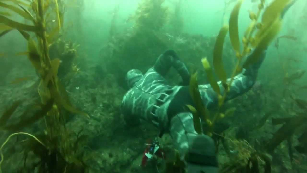 Playing In Southern California Kelp Forest Youtube