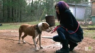 Tania Leads the Rescue to Save Ten Dogs | Pit Bulls and Parolees