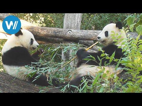 Zoo Vienna - Tiergarten Schönbrunn - The oldest zoo in the world