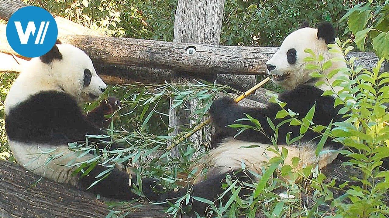 Zoo Vienna Tiergarten Schönbrunn The Oldest Zoo In The World