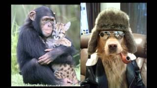 смешные фото с животными, видео приколы с животными.